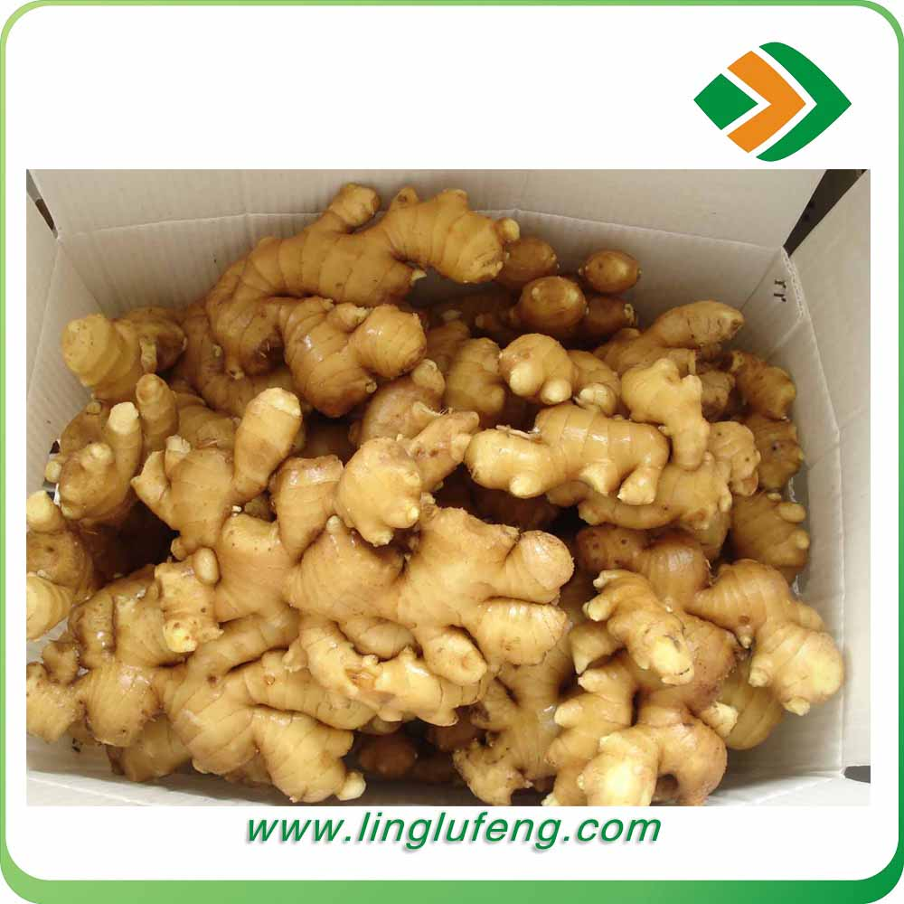 high quality Fresh ginger market wholesale price new crop air dry ginger from China
