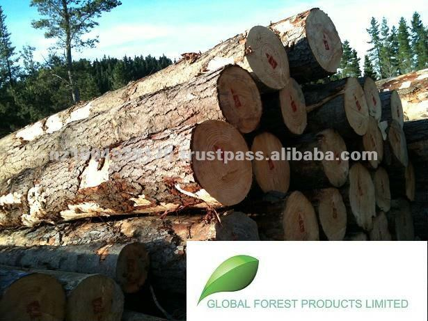 New Zealand Radiata Pine Logs - A Grade