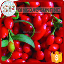Dried goji Berry 2016 hot sale