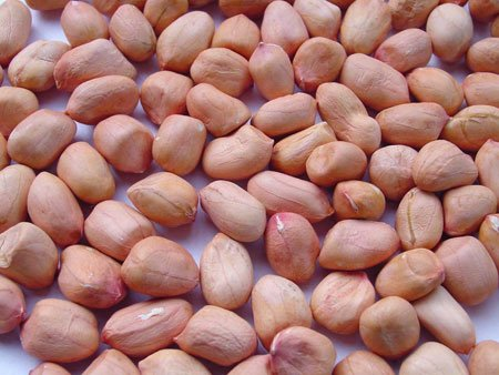 Raw peanuts for sale made in Vietnam
