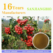 Factory supply Natural Hawthorn Berry Fruit Leaf Extract