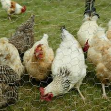 PVC coated hexagonal wire netting / hexagonal chicken rabbit cage mesh / hexagonal aviary wire