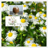 The top Quality 100% Natural Chamomile Extract Apigenin 98% with high quality and competitive price