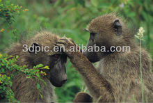 High resolution nature animal baboon 3d picture
