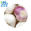 /product-detail/2018-new-crop-normal-white-garlic-5-0-6-0cm-with-mesh-bags-or-cartons-for-export-62025835916.html