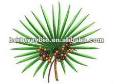 High Quality saw palmetto berry extract