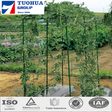 Plant Support Net provide both vertical and horizontal support