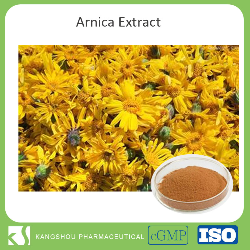 High quality arnica montana flowers arnica powder arnica extract powder