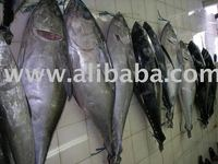 TUNA, SWORDFISH, MARLIN, OILFISH, SKIPJACK, MAHI-MAHI, RED SNAPPER, GROUPER, SARDINES, SQUID, OCTOPUS, CUTTLEFISH ETC