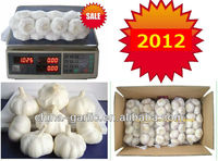 2012 Fresh South Africa Garlic Price