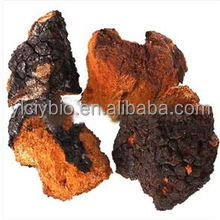 Natural Triterpenoids 2%-20% Chaga Mushroom Extract Phaeoporus obliquus p.e.