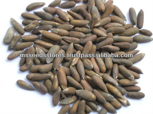 Pakistan Best Quality Pine Nuts In Shell