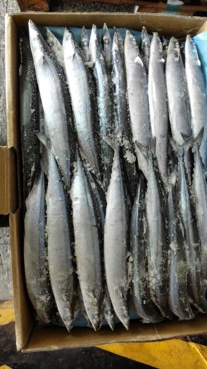 2017 Fresh Frozen Canned Pacific Saury Fish for sale