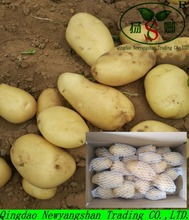 China holland potatoes exporters: Singapore, dubai, UK