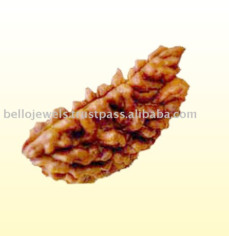 Exclusive 1 Mukhi Holy Rudraksha Bead From Nepal
