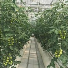 Hydroponics Greenhouse Agriculture using for production