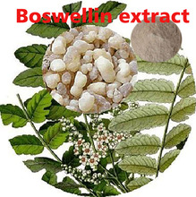 Hot sell 100%pure natural Boswellin extract 65% Boswellic acid Powder