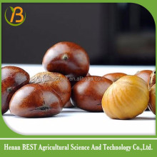 Chinese wholesale chestnut 2016 new season