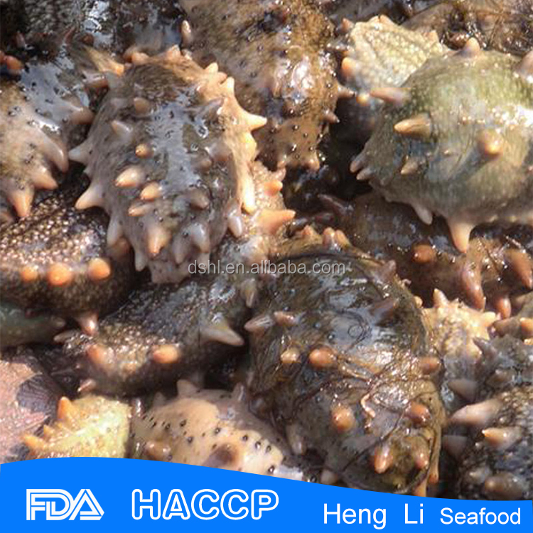 Low price sea cucumber mexico