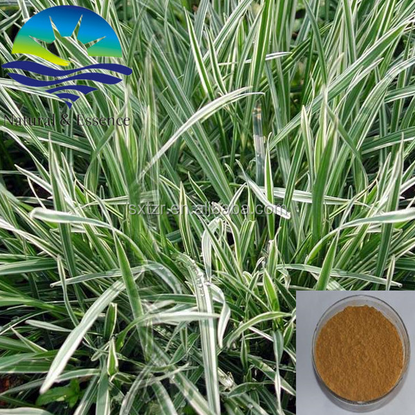 Natural Wild Avena Sativa Extract /Oat Straw Extract/Oat Extract