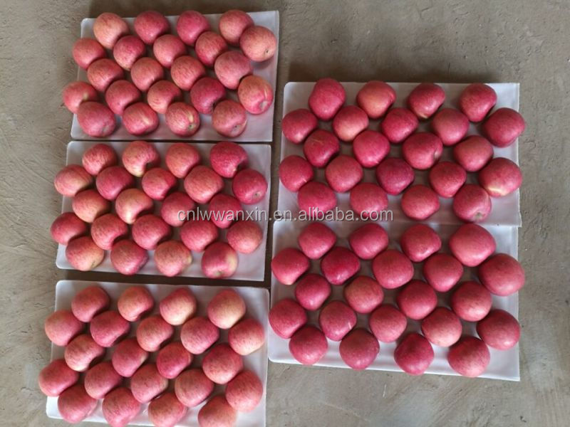 China fresh red Fuji apple for India