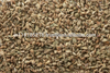 HIGH QUALITY AJWAIN SEED INDIAN (BISHOP WEEDS)