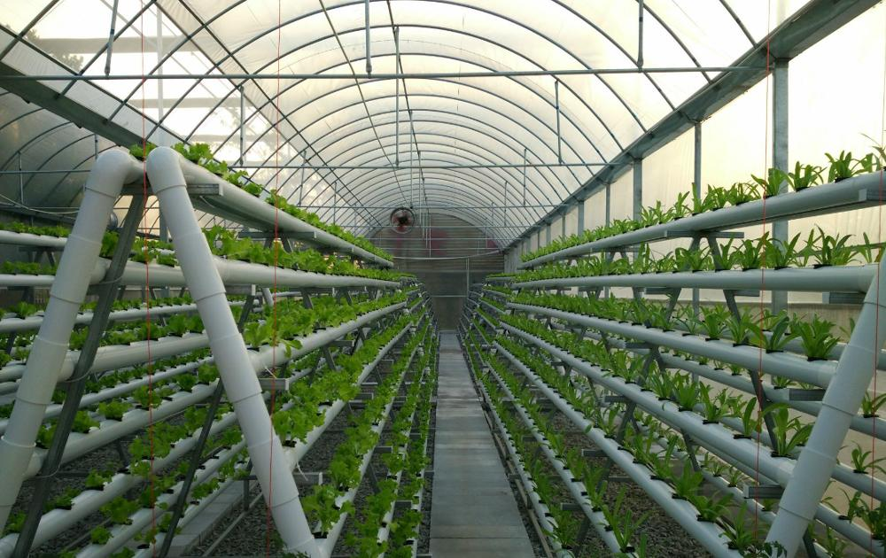 Manufacturer wholesale High quality hydroponics circular in pvc pipe for Greenhouse cultivation