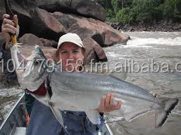 Payara, Hydrolycus Scomberoides, Amazon Payara, Vampire Fish, Payara Vampire Fish