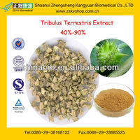 GMP Factory Supply High Quality Tribulus Terrestris Extract Powder 60 Saponins