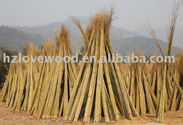 Bamb naturale bastoni canne di bamboo bamboo bastoncini for Cannette di bambu prezzo