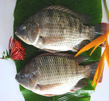 High Price Farming Frozen Red Gutted Scaled Whole Black Tilapia
