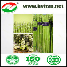 Frozen Asparagus SUPPLY healthy food