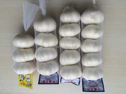New 2016 fresh garlic for overseas by China garlic hometown