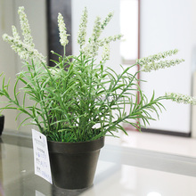 Cheap Mini Artificial Plastic Grass Plant in Pot for Sell