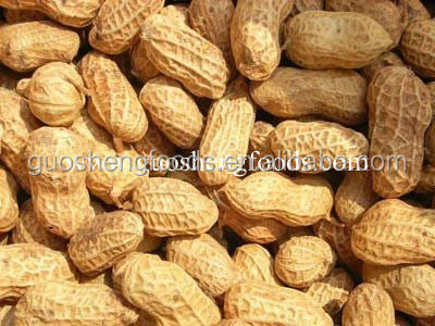China good taste big size roasted peanuts in shell