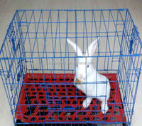 High Quality Welded Wire Mesh Folding Pet Crate/Rabbit Cage/carriers