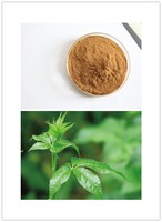 High Quality Eleutherococcus senticosus P.E.,0.8% Eleutherosides B + E,Siberian Ginseng Extract,