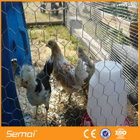 PVC Chicken Coop Galvanized Wire Mesh with Competitive Price