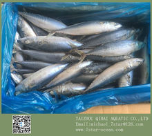 Cold Salted Marcel Fish 10kg 250-350g/pc