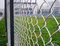 China Anping Manufacturer Good Quality Bird Cage PVC Coated Chain Link Fence