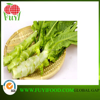 Chinese Supplier Lowest Factory Price Asparagus Lettuce