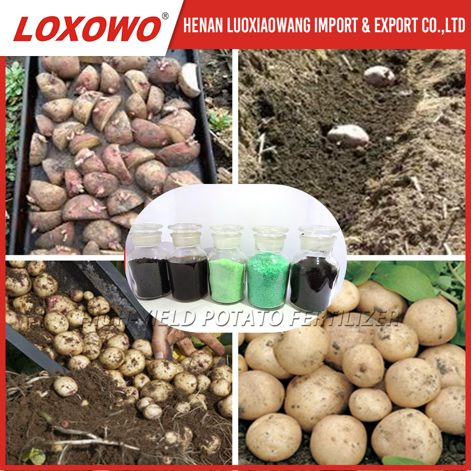 base fertilizer and topdressing fertilizers for potato Big and High starch content