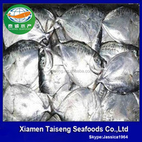 Import Export Seafood Fish Frozen Moonfish Whole Round