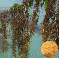 Wholesale High Purity Seaweed Extract / Fucoidan / Fucoxanthin