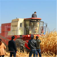 6 rows Grain combine harvester for wheat and corn