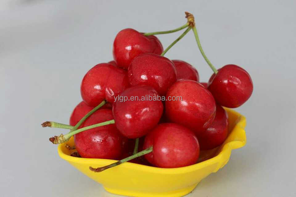 bagged 18 degree sugar content of china fresh cherries