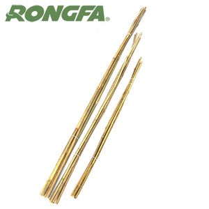Strong Bamboo Canes For Plant Support