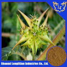 tribulus terrestris l powder extract