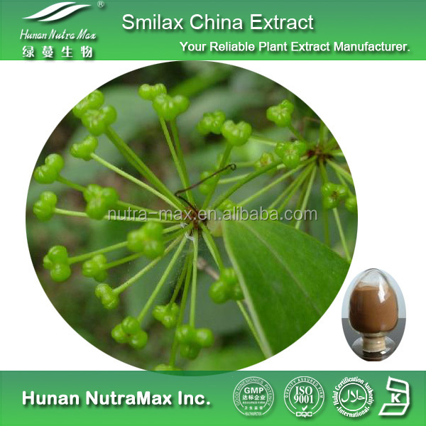 Sarsaparilla Extract Smilax China Smilax with best quality