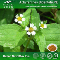 Achyranthes Bidentata P.E.,Achyranthes Bidentata Extract Powder 4:1 5:1 10:1 20:1